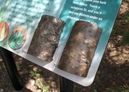 CAST BRONZE TREE BARK, WILLIAM WATSON LODGE TRAIL